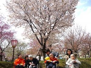 見事な桜の前で記念撮影