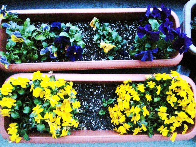 卵色の花びらに、暖かな春の日を思います
